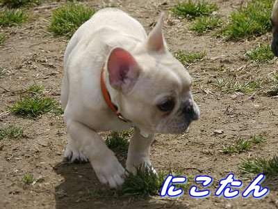 自己紹介 (11)