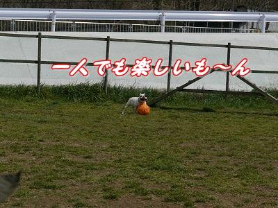 マイボール (9)