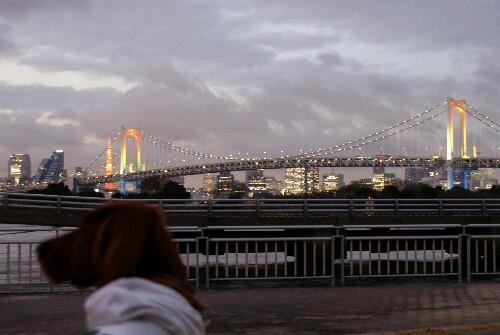 Tokyo night アーリー
