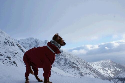 2011年 茶臼岳初登山-9