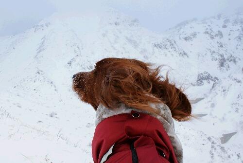 2011年 茶臼岳初登山-13