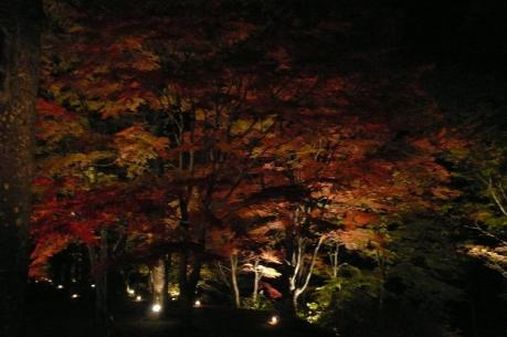 山中湖 紅葉まつり