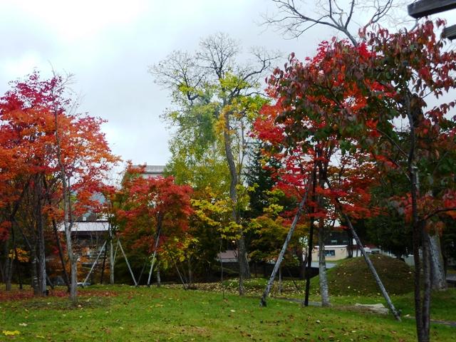 2113公園紅葉