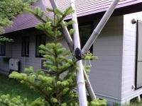 2011006momibokkuri