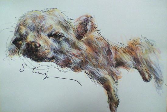 chihuahua3.jpg