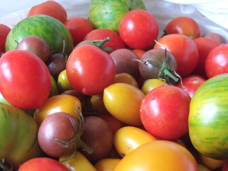 !Tomatoes!