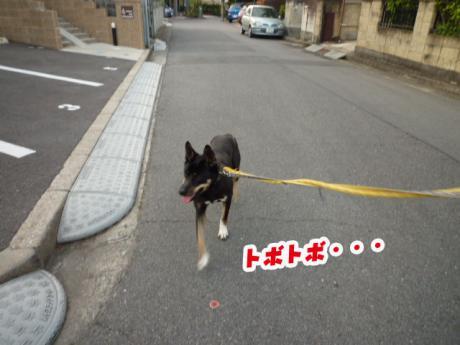 Jrと散歩⑤