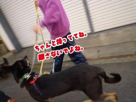 Jrと散歩④