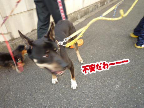 Jrと散歩③