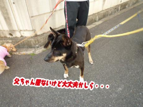 Jrと散歩②