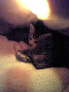 ポラリス子猫①