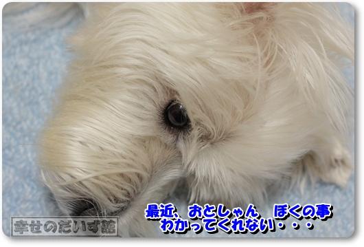 DPP_1435-002.jpg