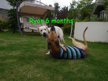ryan6months