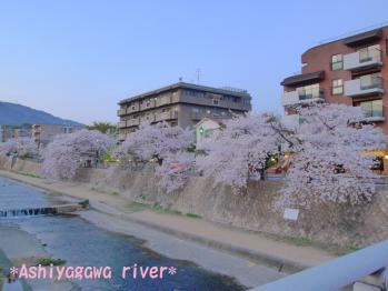 芦屋川大好きな景色
