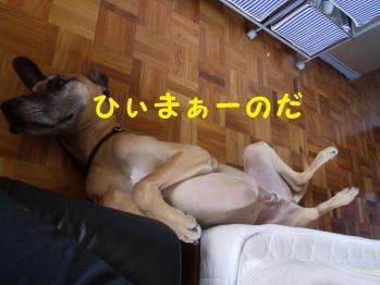 ひまひまダンス