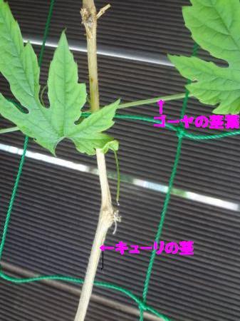 DSC05925_convert_20120725104441.jpg