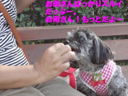 DSC06357_convert_20120818171033.jpg