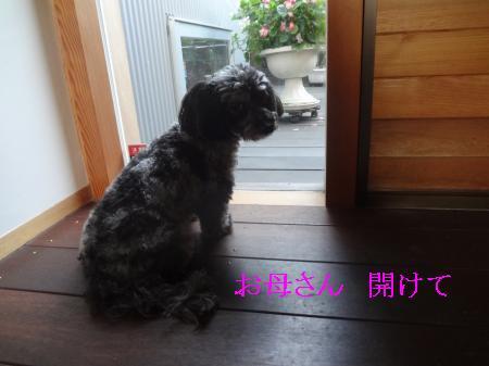 DSC06902_convert_20120926170319.jpg