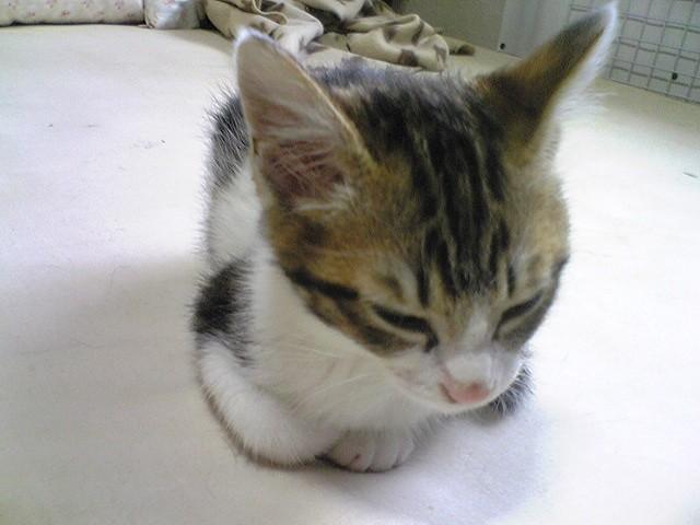 100621子猫14