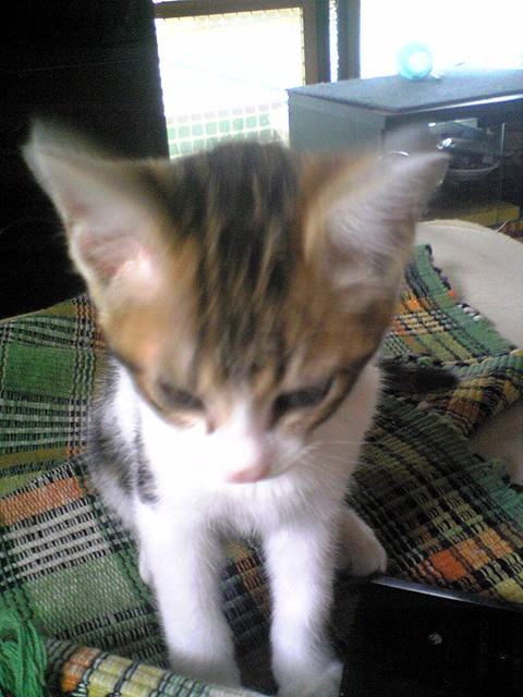 100623子猫02JPG
