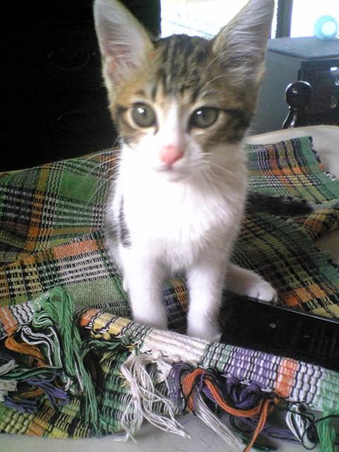 100623子猫01JPG