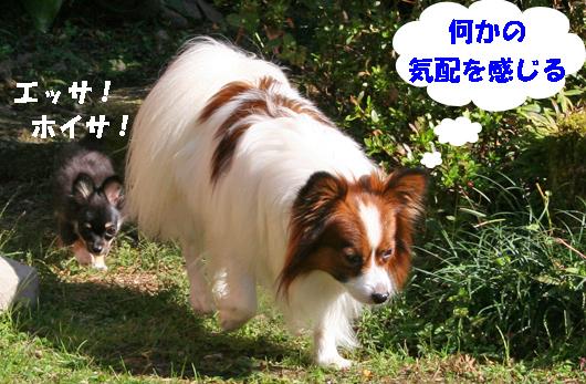 kotakuru091027-1.jpg