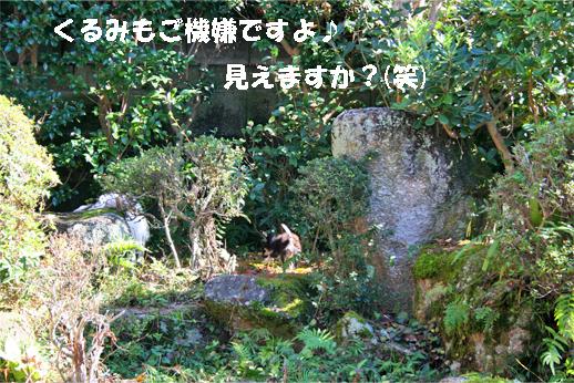 kurumi091027-1.jpg