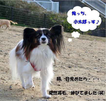 tetokun1_20091214110410.jpg