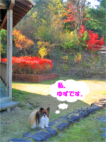yuzu091108-1.jpg