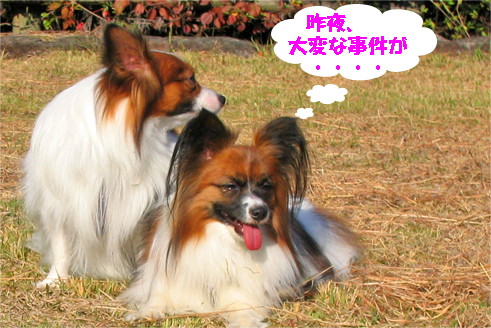yuzu091111-1.jpg