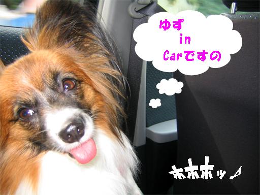 yuzu091125-1.jpg