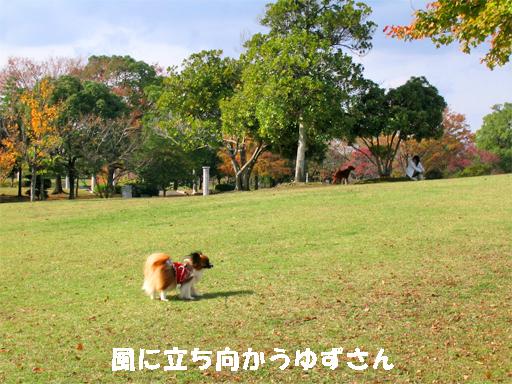 yuzu091125-2.jpg