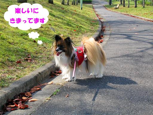 yuzu091125-4.jpg