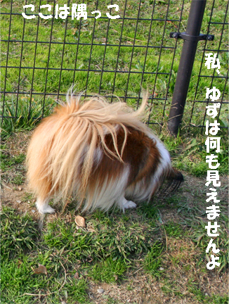yuzu091213-1.jpg