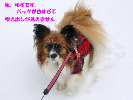 yuzu100105-1.jpg