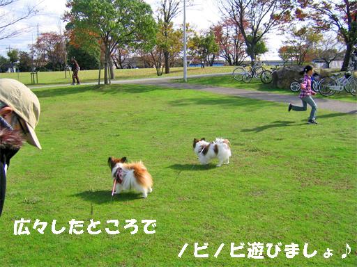 yuzukota091126-1.jpg