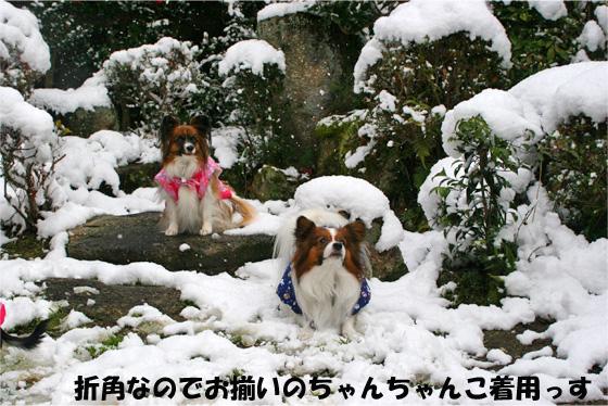 yuzukotakuru100101-2.jpg