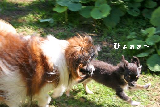 yuzukuru091027-1.jpg