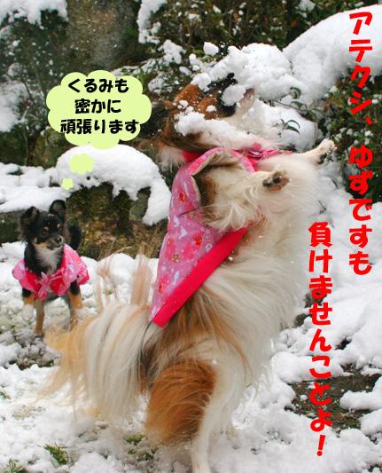 yuzukuru100101.jpg