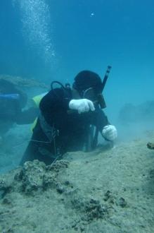 サンゴ移植
