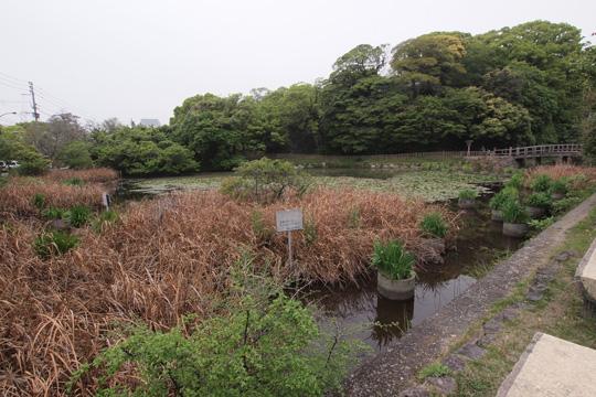 20110503_fukuoka_castle-11.jpg