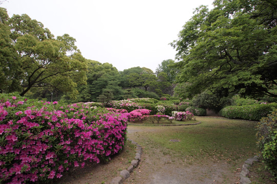 20110503_fukuoka_castle-21.jpg