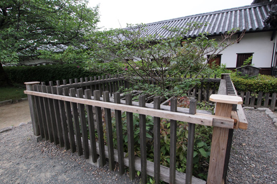 20110503_fukuoka_castle-77.jpg