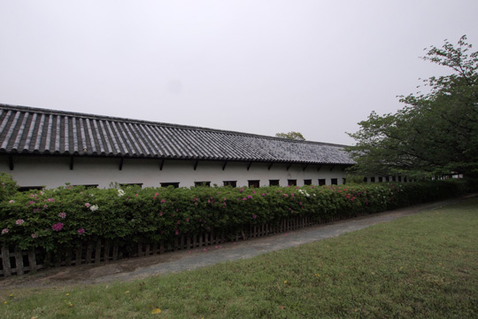 20110503_fukuoka_castle-78.jpg
