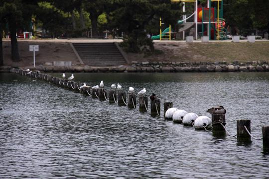 20110503_ohori_park-15.jpg