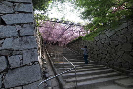 20110505_karatsu_castle-16.jpg