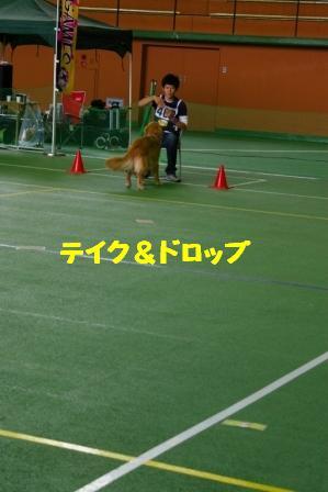 IMGP9249.jpg