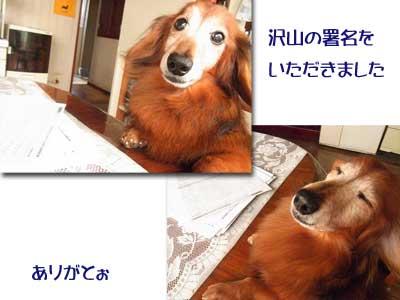 10111-1_20101102132031.jpg