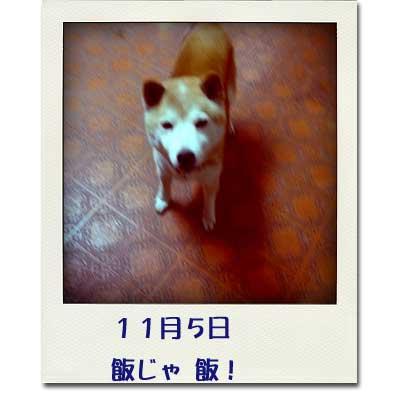 10114-1_20101108121313.jpg