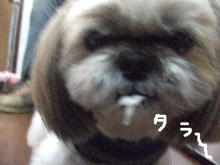 2010_01080181.jpg